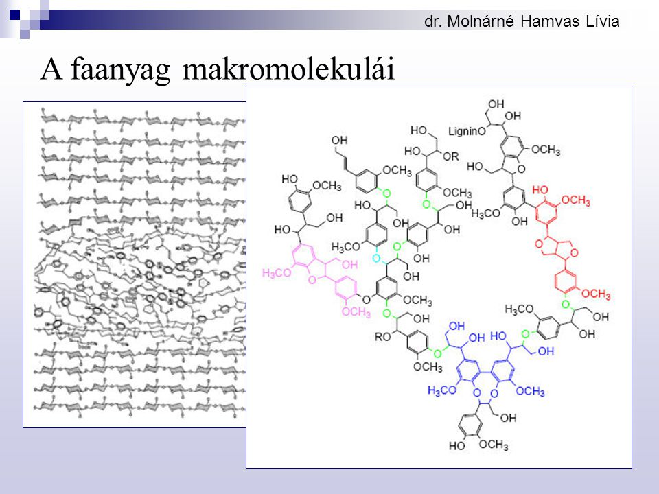 dr. Molnárné Hamvas Lívia A faanyag makromolekulái