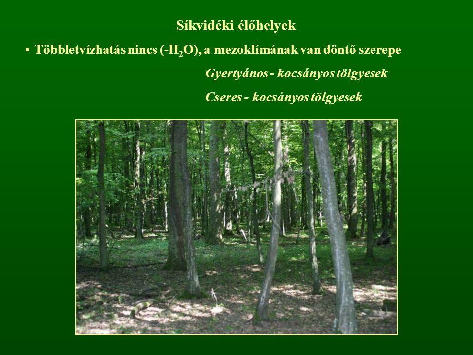 Síkvidéki élőhelyek Többletvízhatás nincs (-H 2 O), a mezoklímának van döntő szerepe Gyertyános - kocsányos tölgyesek Cseres - kocsányos tölgyesek