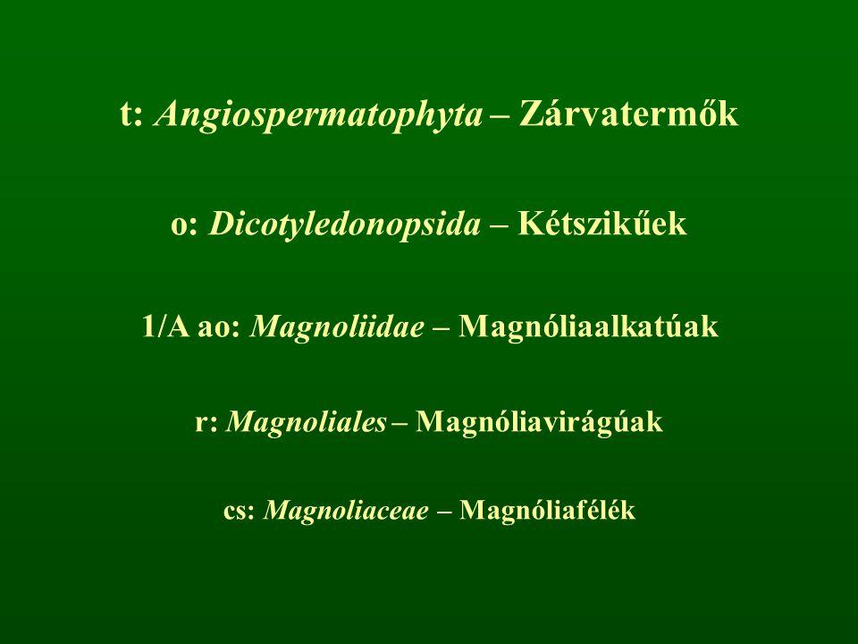 t: Angiospermatophyta – Zárvatermők o: Dicotyledonopsida – Kétszikűek 1/A ao: Magnoliidae – Magnóliaalkatúak r: Magnoliales – Magnóliavirágúak cs: Mag