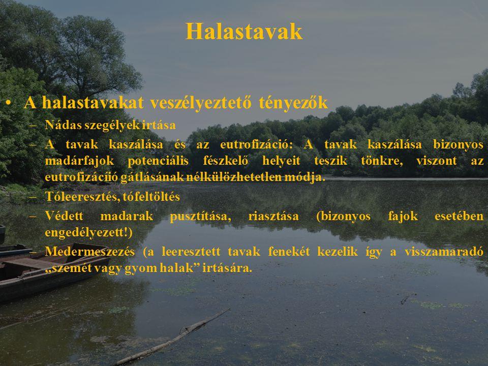 Halastavak A halastavakat veszélyeztető tényezők –Nádas szegélyek irtása –A tavak kaszálása és az eutrofizáció: A tavak kaszálása bizonyos madárfajok