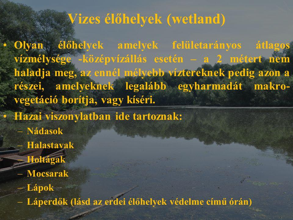 Vizes élőhelyek (wetland) Olyan élőhelyek amelyek felületarányos átlagos vízmélysége -középvízállás esetén – a 2 métert nem haladja meg, az ennél mély