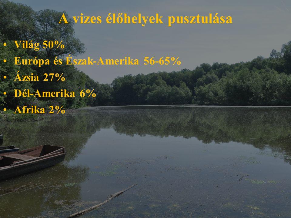 A vizes élőhelyek pusztulása Világ 50% Európa és Észak-Amerika 56-65% Ázsia 27% Dél-Amerika 6% Afrika 2%