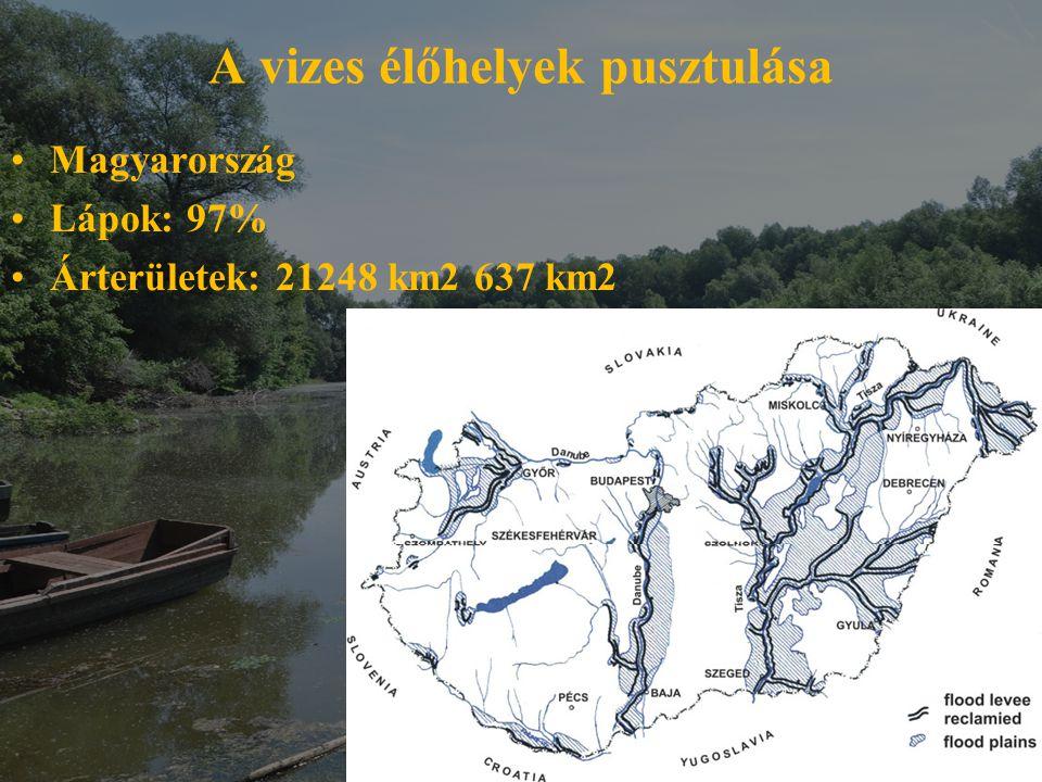 A vizes élőhelyek pusztulása Magyarország Lápok: 97% Árterületek: 21248 km2 637 km2