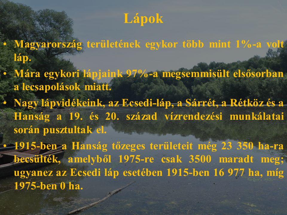 Lápok Magyarország területének egykor több mint 1%-a volt láp. Mára egykori lápjaink 97%-a megsemmisült elsősorban a lecsapolások miatt. Nagy lápvidék