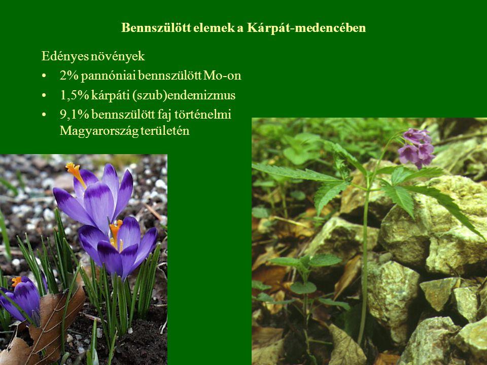 Bennszülött elemek a Kárpát-medencében Edényes növények 2% pannóniai bennszülött Mo-on 1,5% kárpáti (szub)endemizmus 9,1% bennszülött faj történelmi M