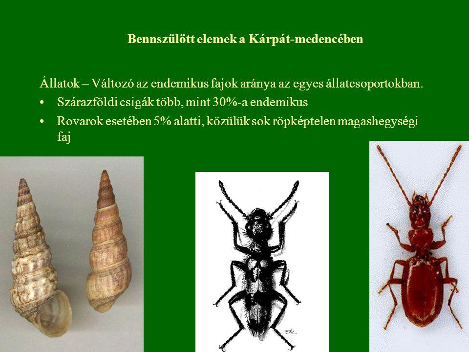 Állatok – Változó az endemikus fajok aránya az egyes állatcsoportokban. Szárazföldi csigák több, mint 30%-a endemikus Rovarok esetében 5% alatti, közü