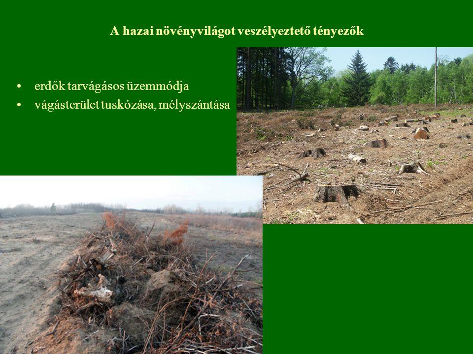 A hazai növényvilágot veszélyeztető tényezők erdők tarvágásos üzemmódja vágásterület tuskózása, mélyszántása