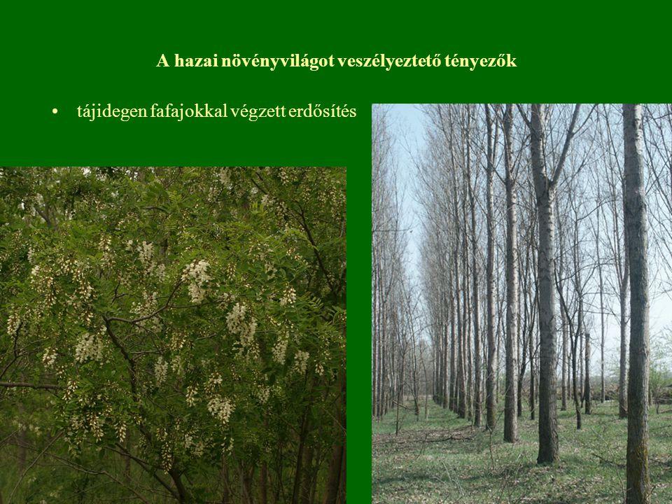 A hazai növényvilágot veszélyeztető tényezők tájidegen fafajokkal végzett erdősítés