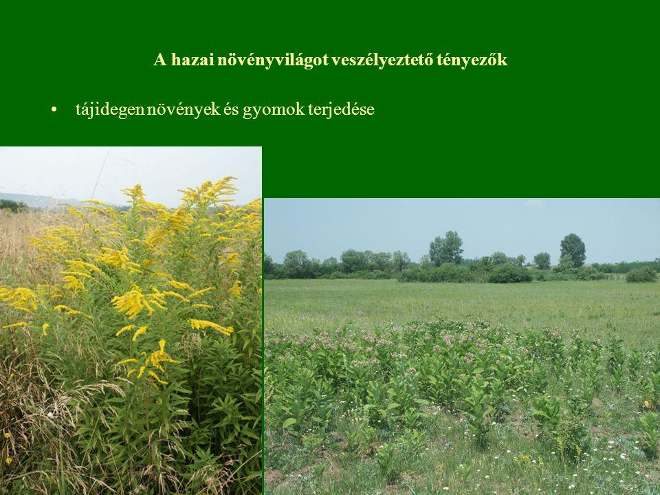 A hazai növényvilágot veszélyeztető tényezők tájidegen növények és gyomok terjedése