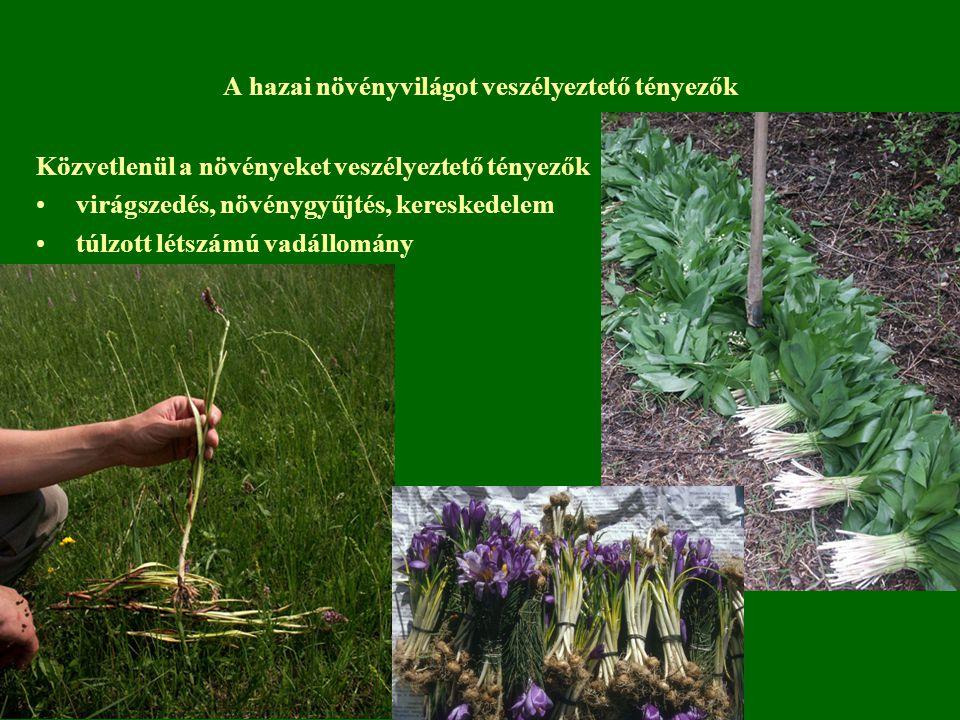 A hazai növényvilágot veszélyeztető tényezők Közvetlenül a növényeket veszélyeztető tényezők virágszedés, növénygyűjtés, kereskedelem túlzott létszámú