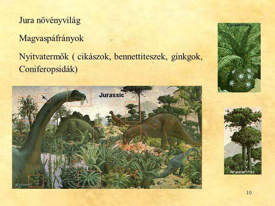10 Jura növényvilág Magvaspáfrányok Nyitvatermők ( cikászok, bennettiteszek, ginkgok, Coniferopsidák)