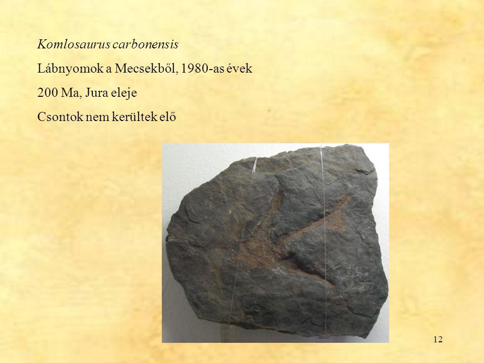 12 Komlosaurus carbonensis Lábnyomok a Mecsekből, 1980-as évek 200 Ma, Jura eleje Csontok nem kerültek elő