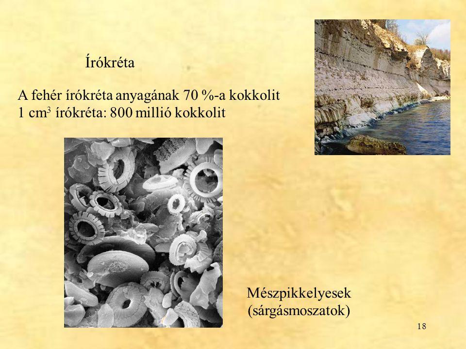18 Írókréta A fehér írókréta anyagának 70 %-a kokkolit 1 cm 3 írókréta: 800 millió kokkolit Mészpikkelyesek (sárgásmoszatok)