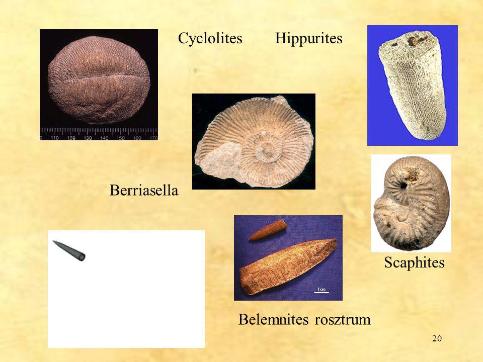 20 Berriasella Scaphites Belemnites rosztrum Cyclolites Hippurites