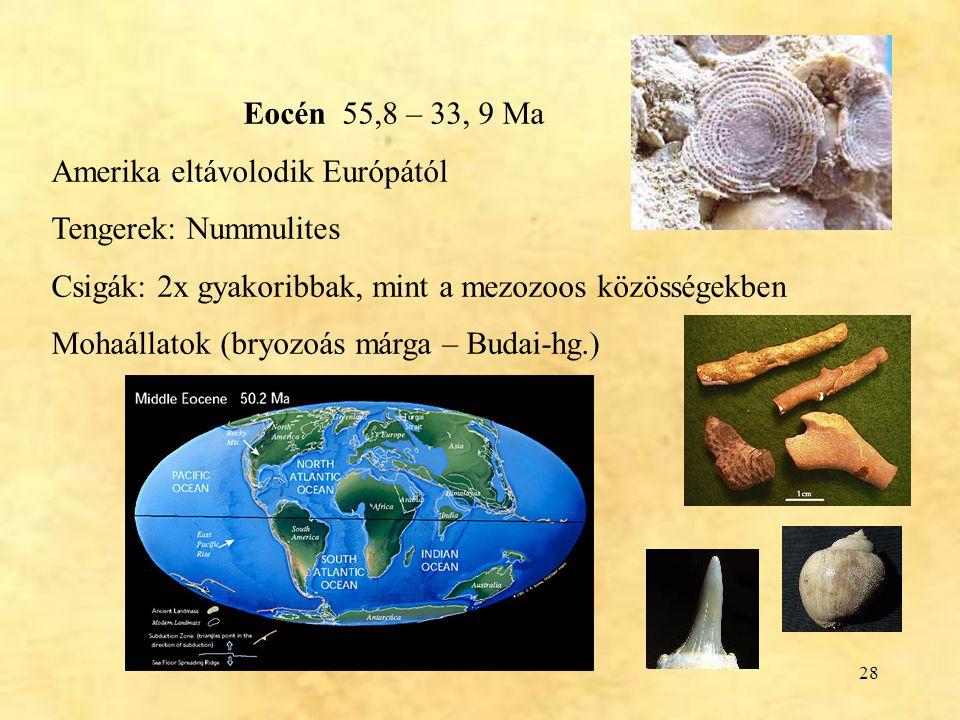 28 Eocén 55,8 – 33, 9 Ma Amerika eltávolodik Európától Tengerek: Nummulites Csigák: 2x gyakoribbak, mint a mezozoos közösségekben Mohaállatok (bryozoá