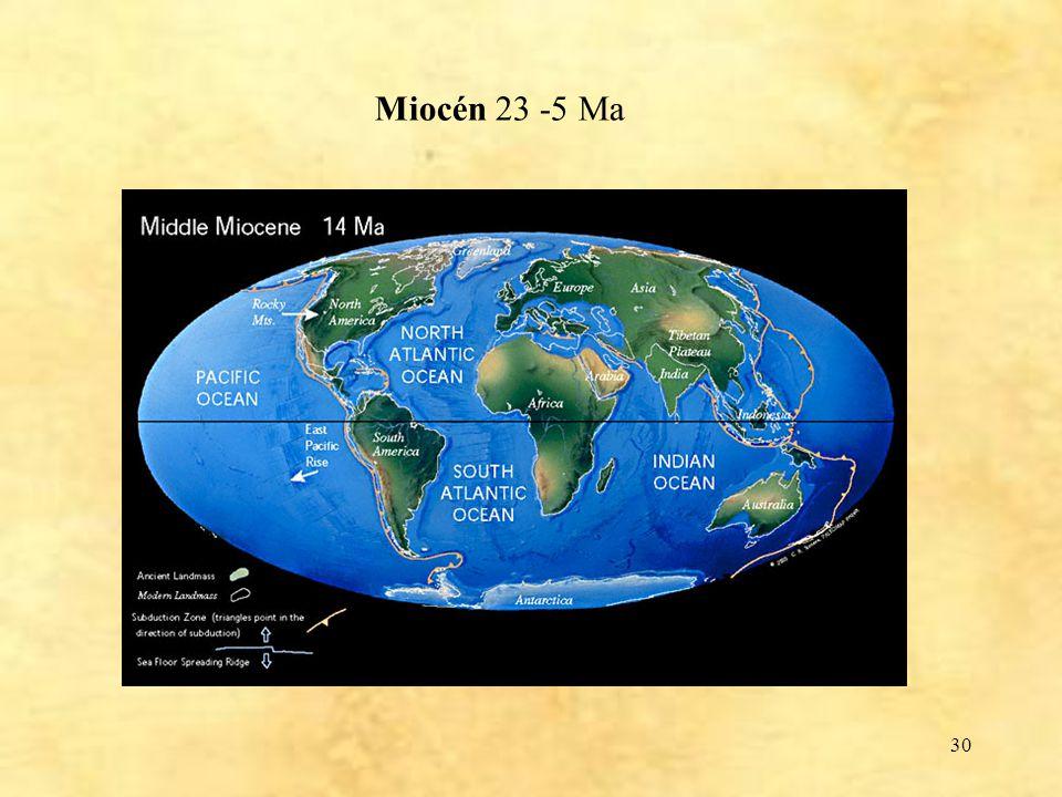 30 Miocén 23 -5 Ma