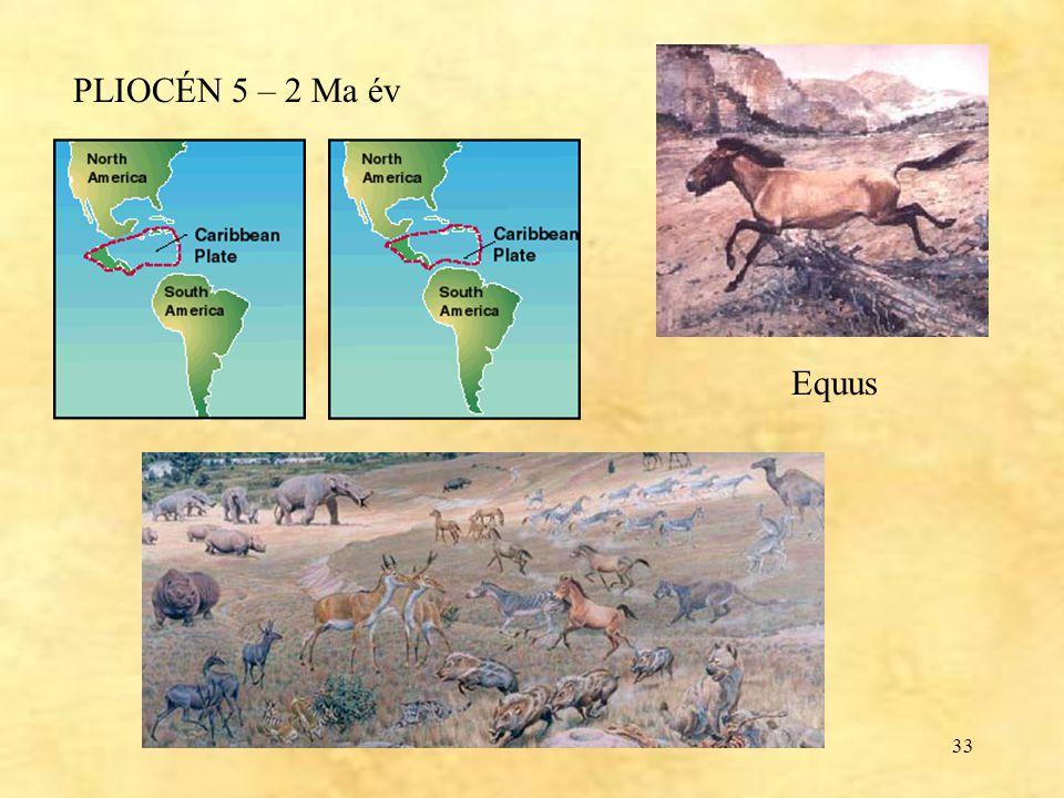 33 PLIOCÉN 5 – 2 Ma év Equus