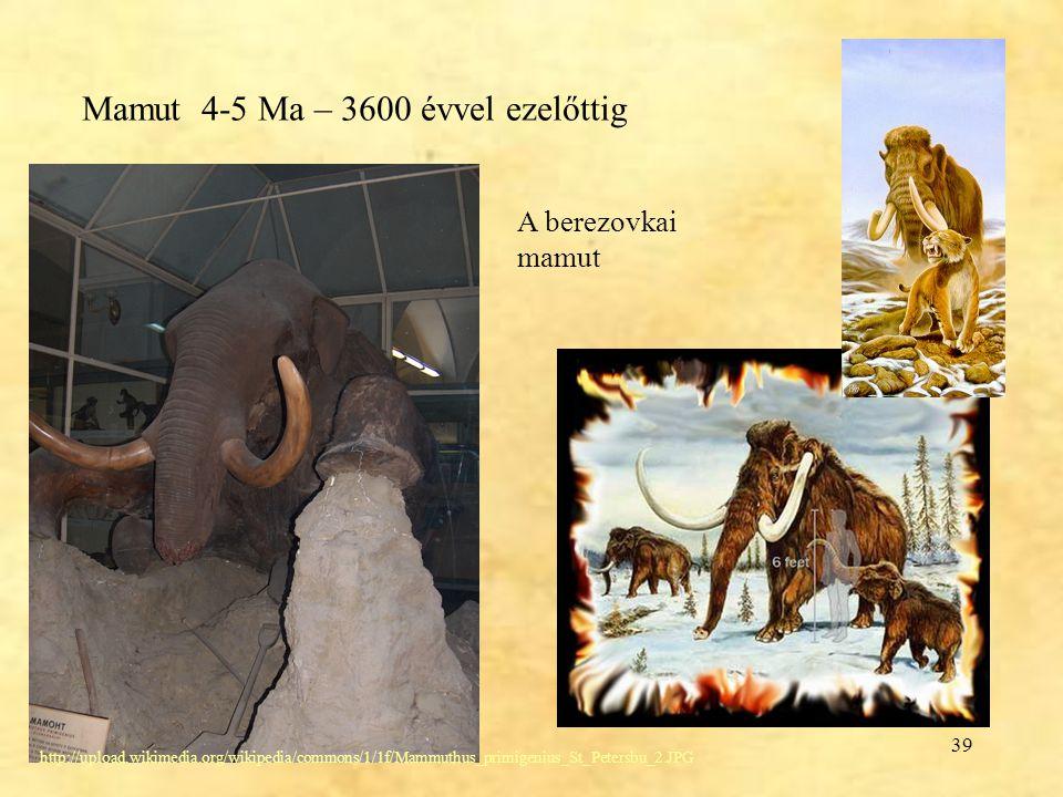 39 Mamut 4-5 Ma – 3600 évvel ezelőttig http://upload.wikimedia.org/wikipedia/commons/1/1f/Mammuthus_primigenius_St_Petersbu_2.JPG A berezovkai mamut