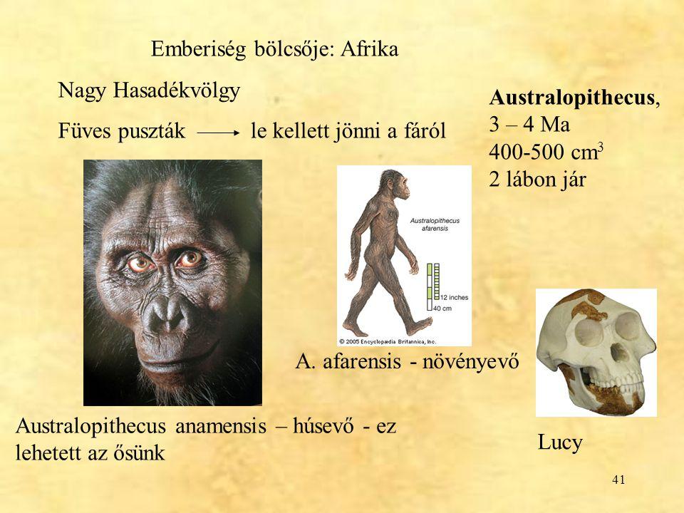 41 Lucy Australopithecus anamensis – húsevő - ez lehetett az ősünk Emberiség bölcsője: Afrika Nagy Hasadékvölgy Füves puszták le kellett jönni a fáról