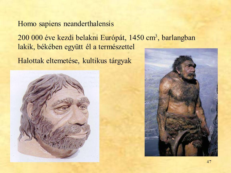 47 Homo sapiens neanderthalensis 200 000 éve kezdi belakni Európát, 1450 cm 3, barlangban lakik, békében együtt él a természettel Halottak eltemetése,