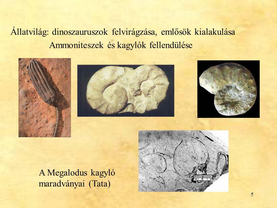6 Placochelys placodonta (bakonyi kavicsfogú álteknős) Laczkó Dezső (1889), Veszprém Jellemzők: állkapcsán és szájpadlásán lapos, kavicsszerű örlő- fogak vannak; az elülső fogak helyén szaru- anyagú csőr képződhetett csak a TRIÁSZból ismertek (a veszprémi lelet a késő-triászból való)