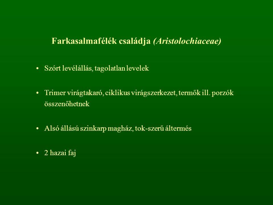 Farkasalmafélék családja (Aristolochiaceae) Szórt levélállás, tagolatlan levelek Trimer virágtakaró, ciklikus virágszerkezet, termők ill. porzók össze