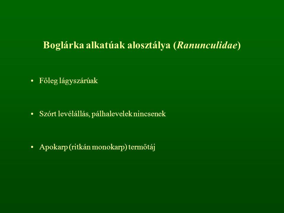 Boglárka alkatúak alosztálya (Ranunculidae) Főleg lágyszárúak Szórt levélállás, pálhalevelek nincsenek Apokarp (ritkán monokarp) termőtáj