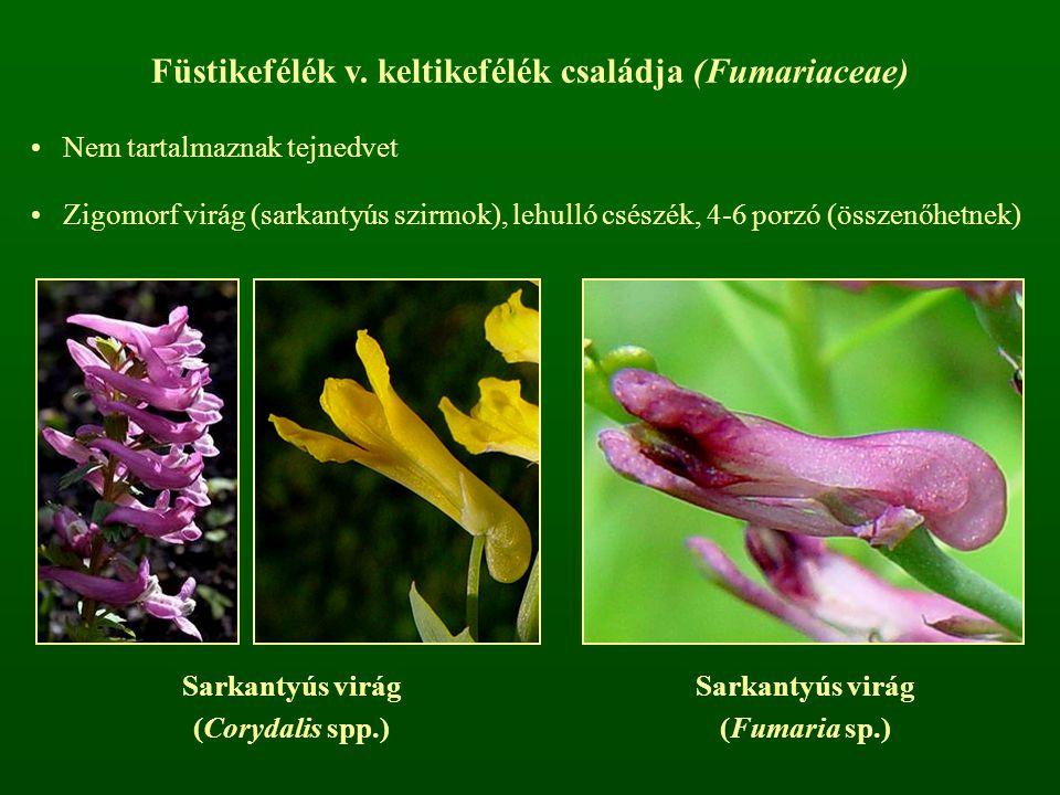 Füstikefélék v. keltikefélék családja (Fumariaceae) Nem tartalmaznak tejnedvet Zigomorf virág (sarkantyús szirmok), lehulló csészék, 4-6 porzó (összen