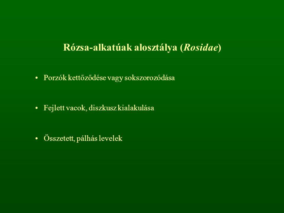 Rózsa-alkatúak alosztálya (Rosidae) Porzók kettőződése vagy sokszorozódása Fejlett vacok, diszkusz kialakulása Összetett, pálhás levelek