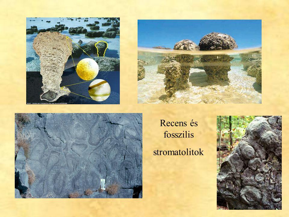 14 Recens és fosszilis stromatolitok