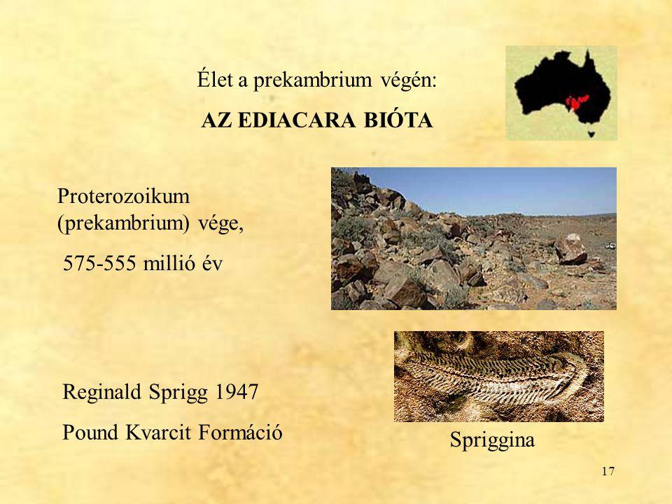 17 Élet a prekambrium végén: AZ EDIACARA BIÓTA Reginald Sprigg 1947 Pound Kvarcit Formáció Spriggina Proterozoikum (prekambrium) vége, 575-555 millió