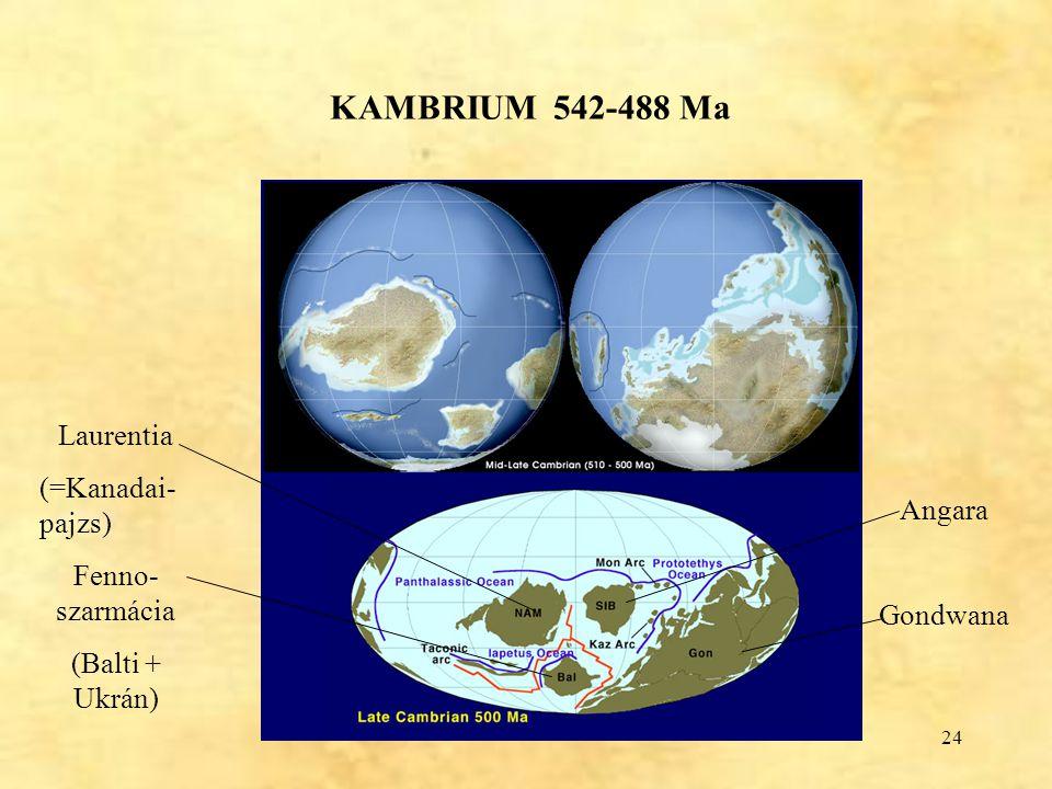 24 KAMBRIUM 542-488 Ma Laurentia (=Kanadai- pajzs) Fenno- szarmácia (Balti + Ukrán) Angara Gondwana