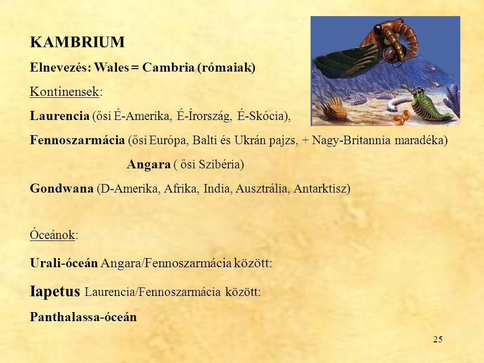 25 KAMBRIUM Elnevezés: Wales = Cambria (rómaiak) Kontinensek: Laurencia (ősi É-Amerika, É-Írország, É-Skócia), Fennoszarmácia (ősi Európa, Balti és Uk