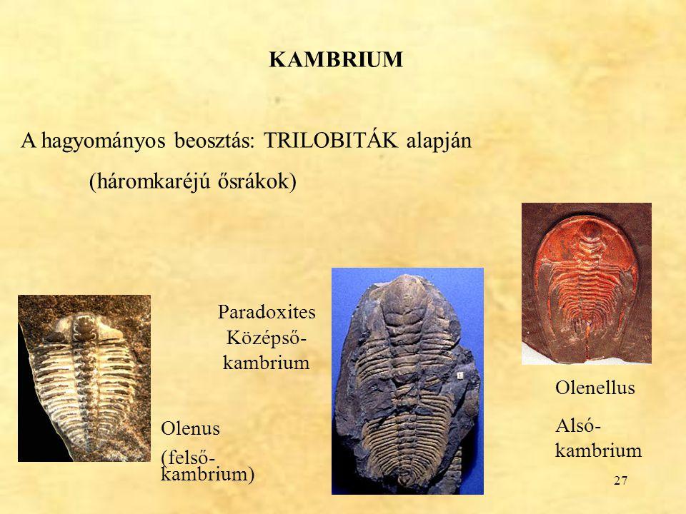 27 KAMBRIUM A hagyományos beosztás: TRILOBITÁK alapján (háromkaréjú ősrákok) Olenellus Alsó- kambrium Olenus (felső- kambrium) Paradoxites Középső- ka