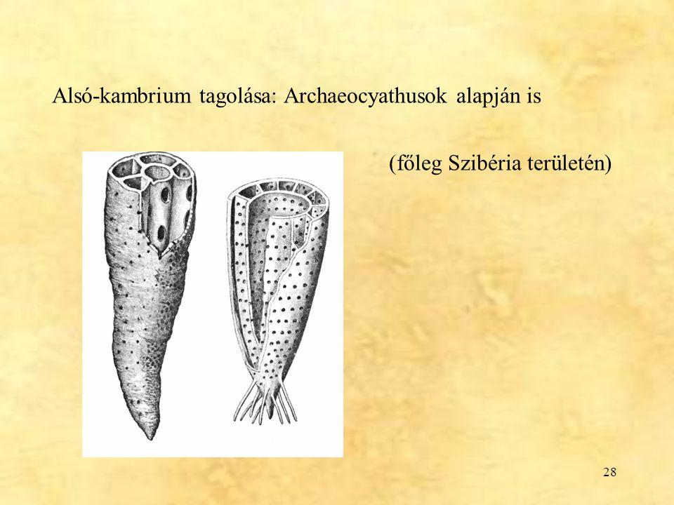 28 Alsó-kambrium tagolása: Archaeocyathusok alapján is (főleg Szibéria területén)