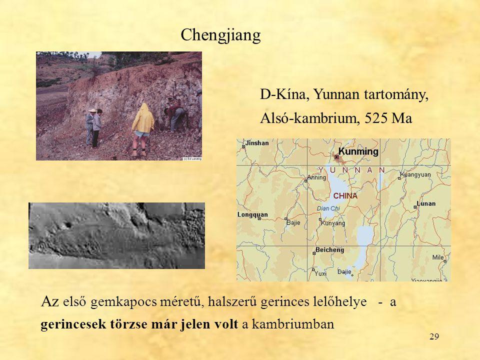 29 Chengjiang D-Kína, Yunnan tartomány, Alsó-kambrium, 525 Ma Az első gemkapocs méretű, halszerű gerinces lelőhelye - a gerincesek törzse már jelen vo