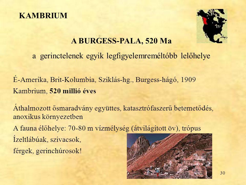 30 A BURGESS-PALA, 520 Ma a gerinctelenek egyik legfigyelemreméltóbb lelőhelye É-Amerika, Brit-Kolumbia, Sziklás-hg., Burgess-hágó, 1909 Kambrium, 520