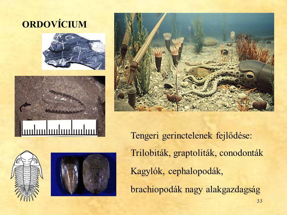 33 ORDOVÍCIUM Tengeri gerinctelenek fejlődése: Trilobiták, graptoliták, conodonták Kagylók, cephalopodák, brachiopodák nagy alakgazdagság