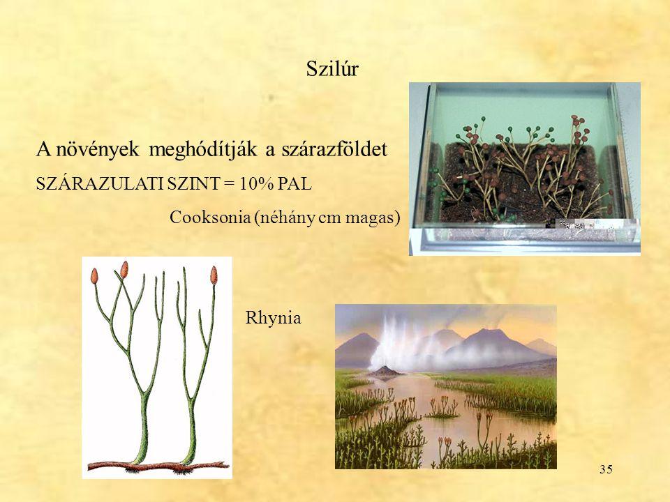 35 Szilúr A növények meghódítják a szárazföldet SZÁRAZULATI SZINT = 10% PAL Cooksonia (néhány cm magas) Rhynia