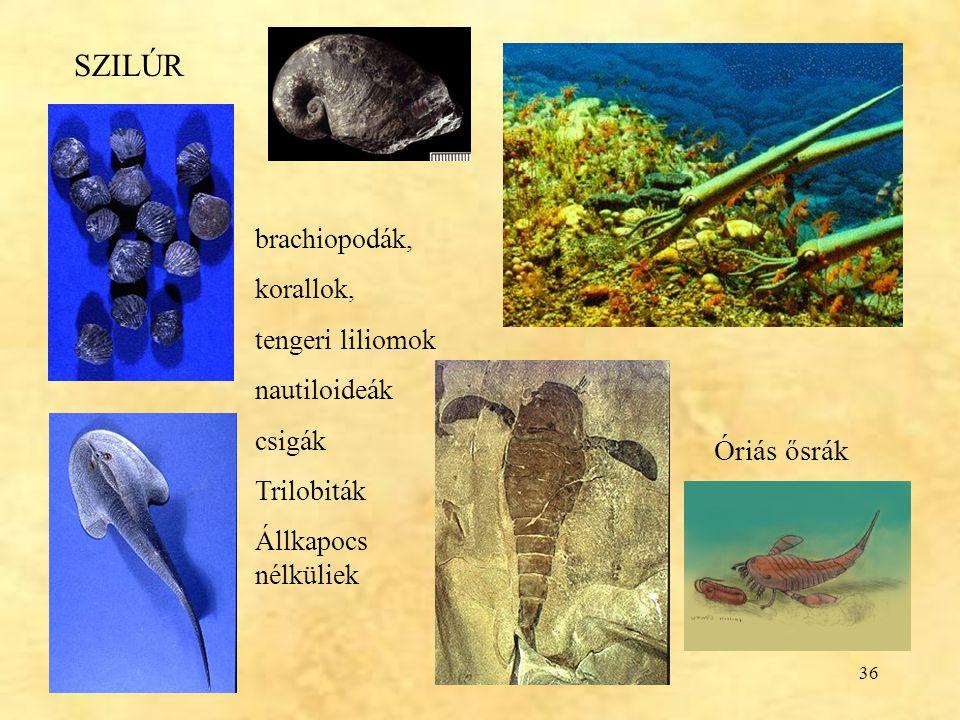 36 SZILÚR brachiopodák, korallok, tengeri liliomok nautiloideák csigák Trilobiták Állkapocs nélküliek Óriás ősrák