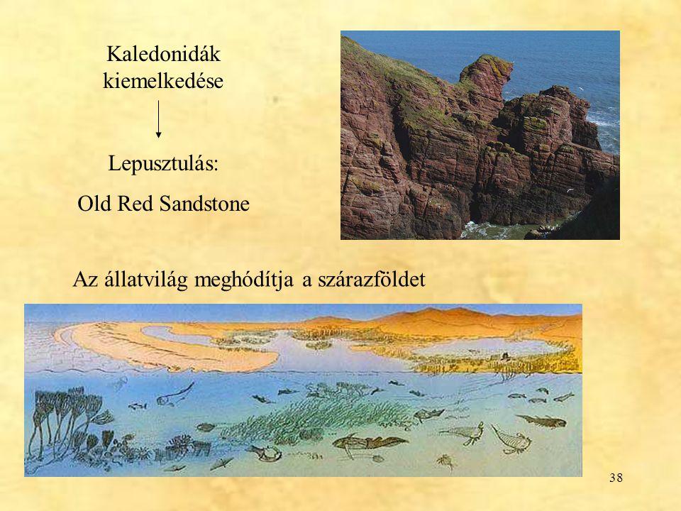 38 Kaledonidák kiemelkedése Lepusztulás: Old Red Sandstone Az állatvilág meghódítja a szárazföldet