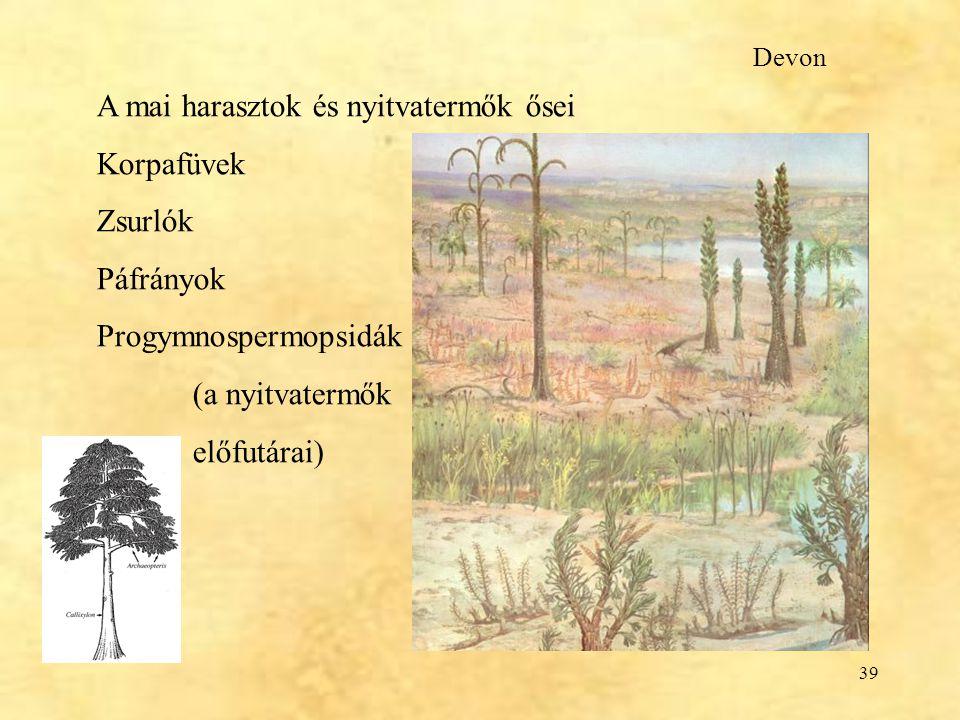 39 A mai harasztok és nyitvatermők ősei Korpafüvek Zsurlók Páfrányok Progymnospermopsidák (a nyitvatermők előfutárai) Devon