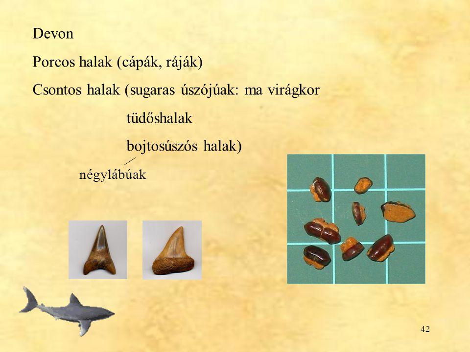 42 Devon Porcos halak (cápák, ráják) Csontos halak (sugaras úszójúak: ma virágkor tüdőshalak bojtosúszós halak) négylábúak