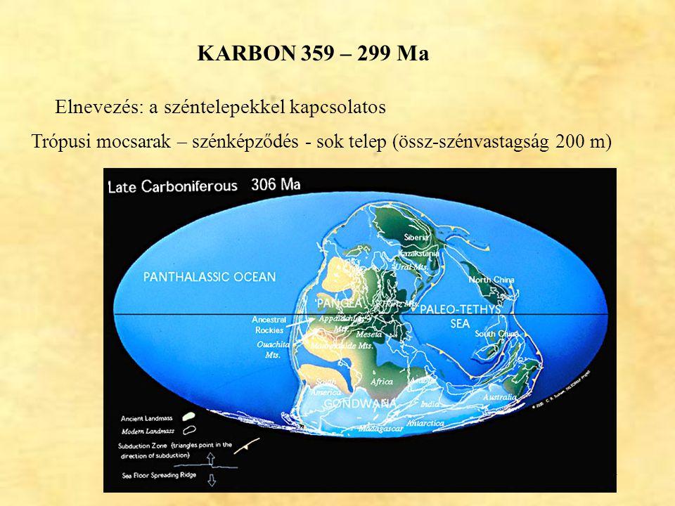 44 KARBON 359 – 299 Ma Elnevezés: a széntelepekkel kapcsolatos Trópusi mocsarak – szénképződés - sok telep (össz-szénvastagság 200 m)