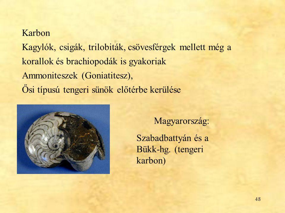 48 Karbon Kagylók, csigák, trilobiták, csövesférgek mellett még a korallok és brachiopodák is gyakoriak Ammoniteszek (Goniatitesz), Ősi típusú tengeri