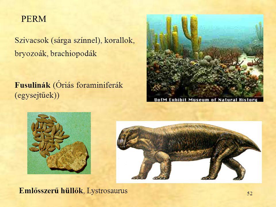 52 PERM Szivacsok (sárga színnel), korallok, bryozoák, brachiopodák Fusulinák (Óriás foraminiferák (egysejtűek)) Emlősszerű hüllők, Lystrosaurus