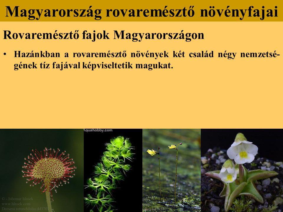 Hazánkban a rovaremésztő növények két család négy nemzetsé- gének tíz fajával képviseltetik magukat.