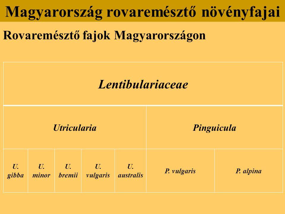 Rovaremésztő fajok Magyarországon Magyarország rovaremésztő növényfajai Lentibulariaceae UtriculariaPinguicula U.