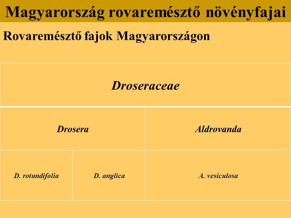 Rovaremésztő fajok Magyarországon Magyarország rovaremésztő növényfajai Droseraceae DroseraAldrovanda D.