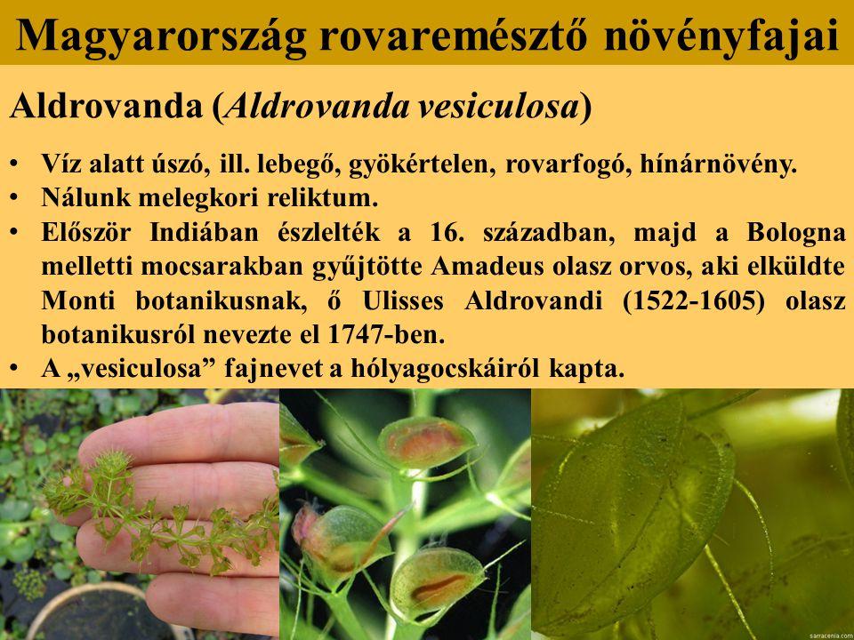 Aldrovanda (Aldrovanda vesiculosa) Víz alatt úszó, ill.